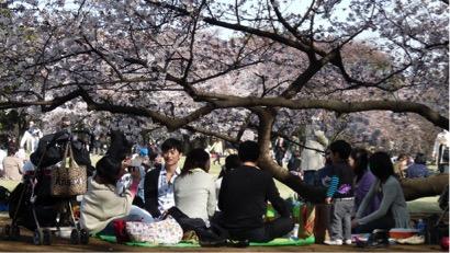 신쥬쿠 교엔의 역사